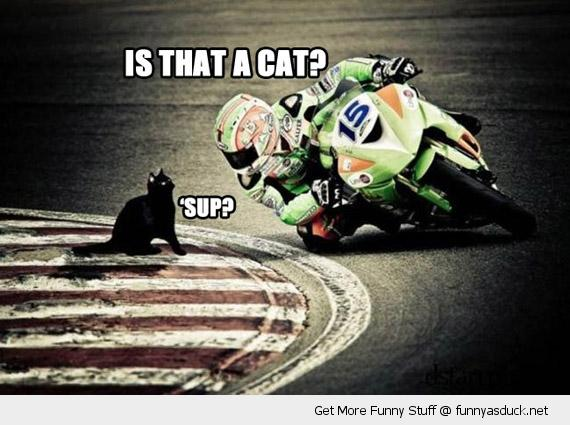 cat at a motorcycle race meme